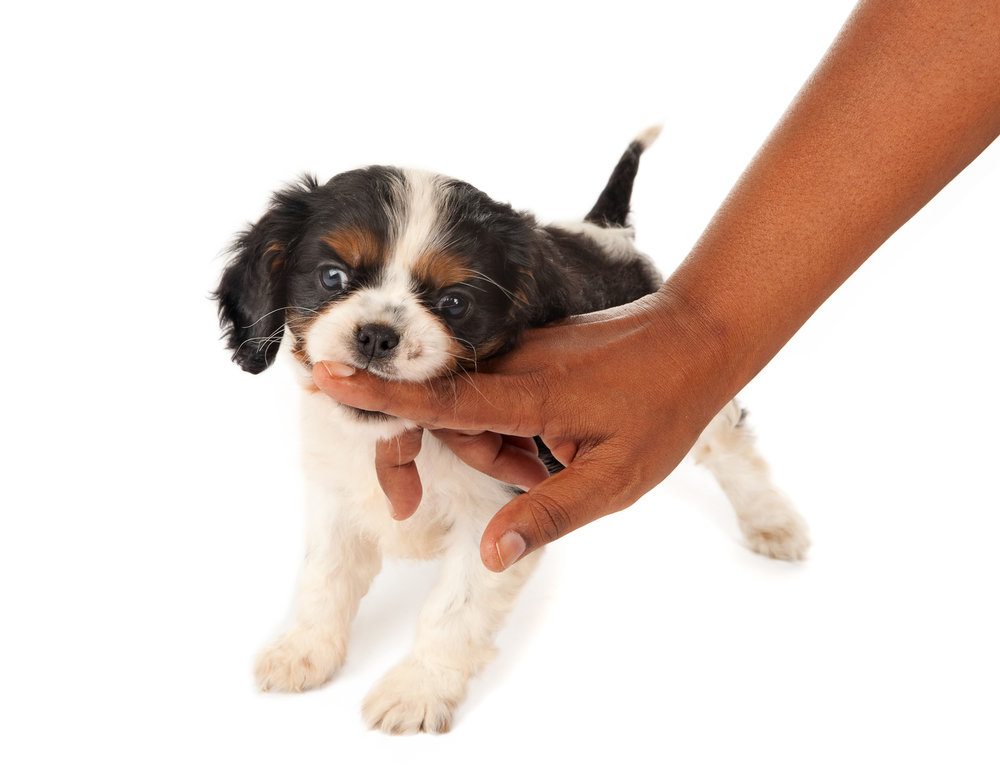 Puppies ABC for Dog Trainers - $39.90 USD