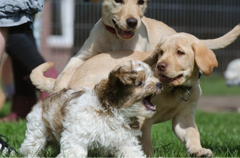 Setting Up Your Own Puppy Class - Part 3 - $39.90 USD