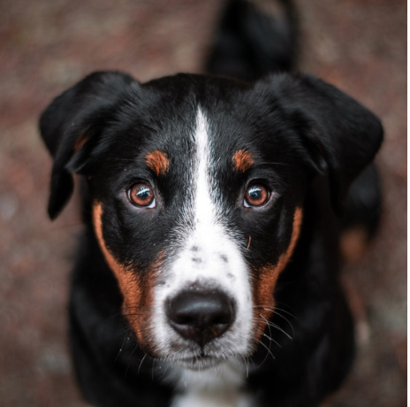 BASIC DOG TRAINING CLASSES - FOR FRIENDLY DOGS OF ALL AGES AND SIZES. TEACH YOUR DOG THE BASICS AND PREVENT BEHAVIOUR PROBLEMS