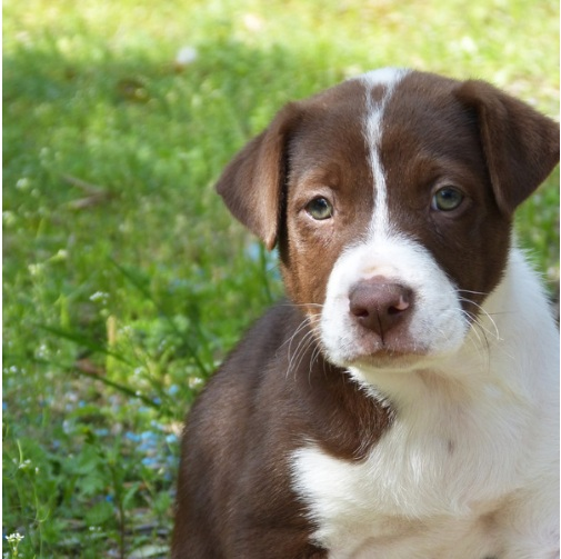 EARLY PUPPY SOCIALISATION CLASSES - EXTRA-SMALL & SMALL BREEDS CAN JOIN FROM 8-16 WEEKSMEDIUM, LARGE, & EXTRA-LARGE BREEDS CAN JOIN FROM 8-12 WEEKS