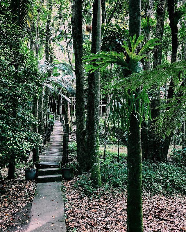 AirBnb wins. @rainforest_retreat.eco_cabin