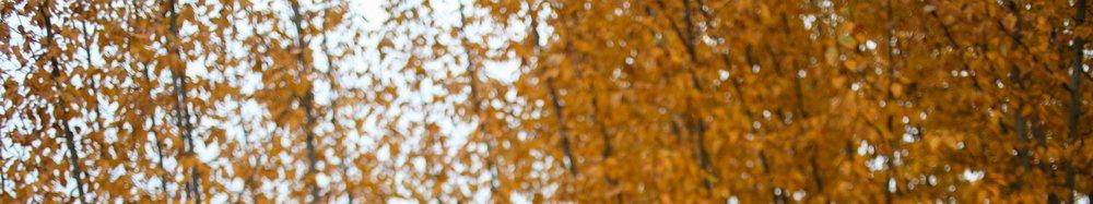 snippet of fall leaves.jpg