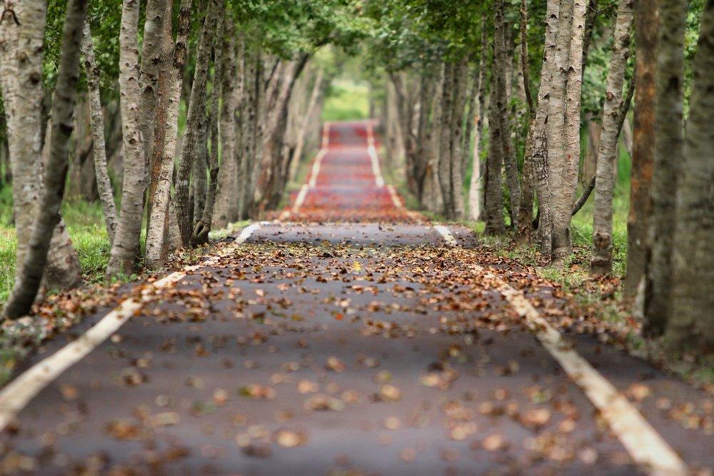 woodland-road-falling-leaf-natural-38537 pexesl.jpeg