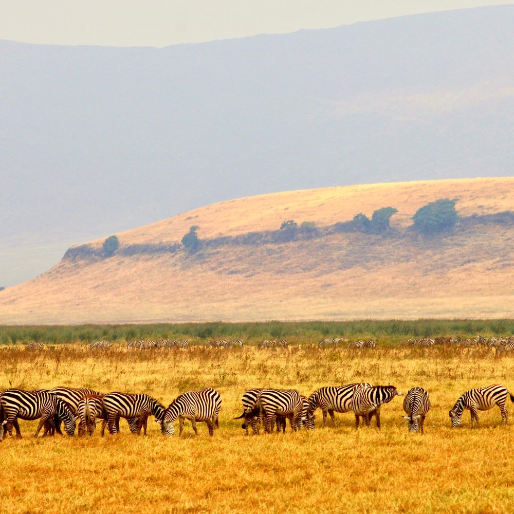 Ngorongoro 1.jpeg