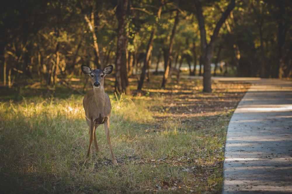 deer-low.jpg