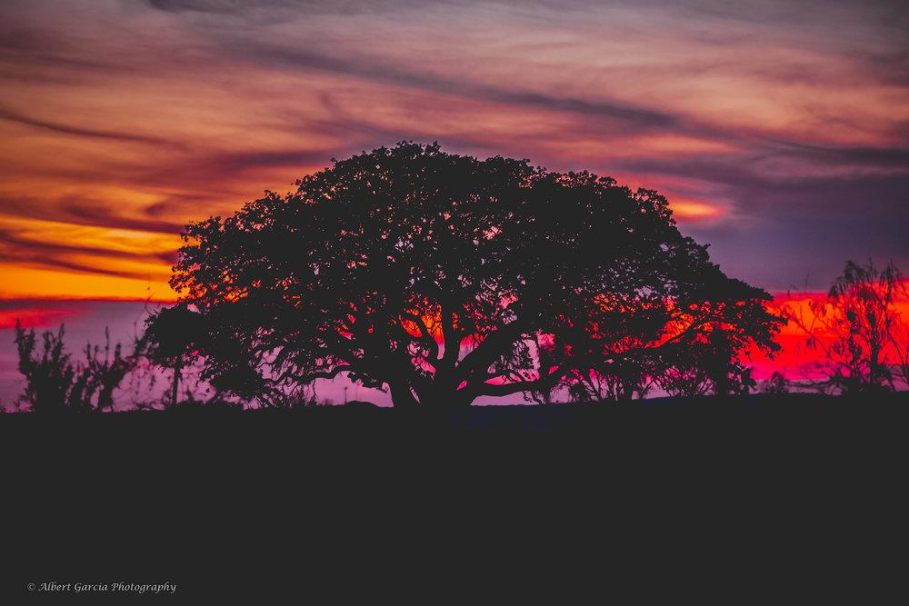 colorful sunset no WM 3 watermark - 150.jpg