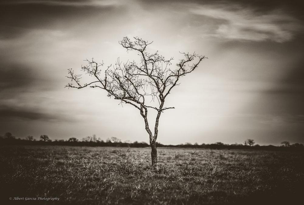 lone tree 2 - 96.jpg