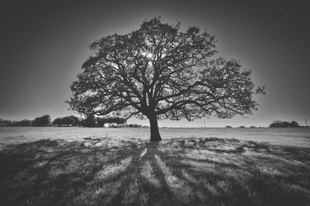 tree of life 3 NO WM.jpg