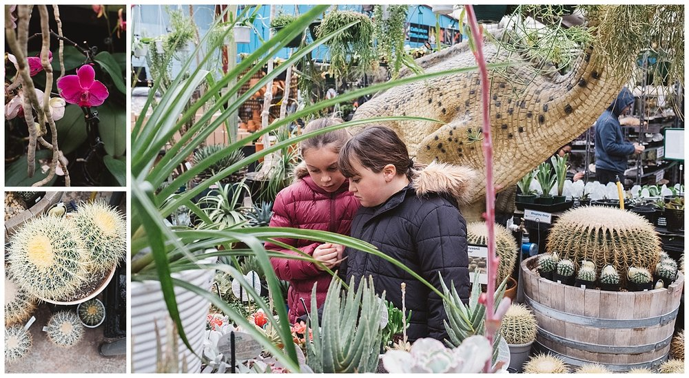 mornington family and toddler lifestyle photography, cactus and flowers
