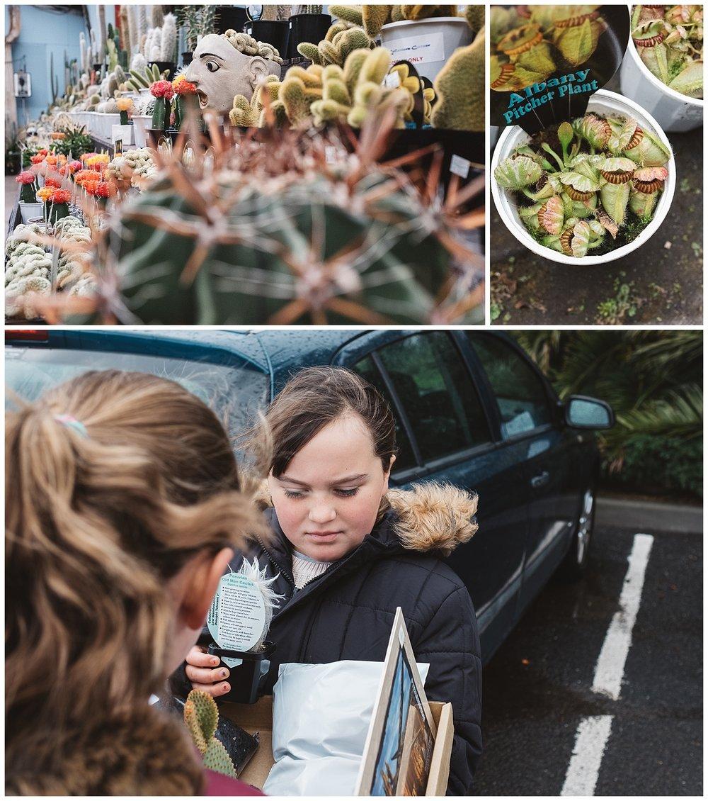 elsternwick cactus and pot plants
