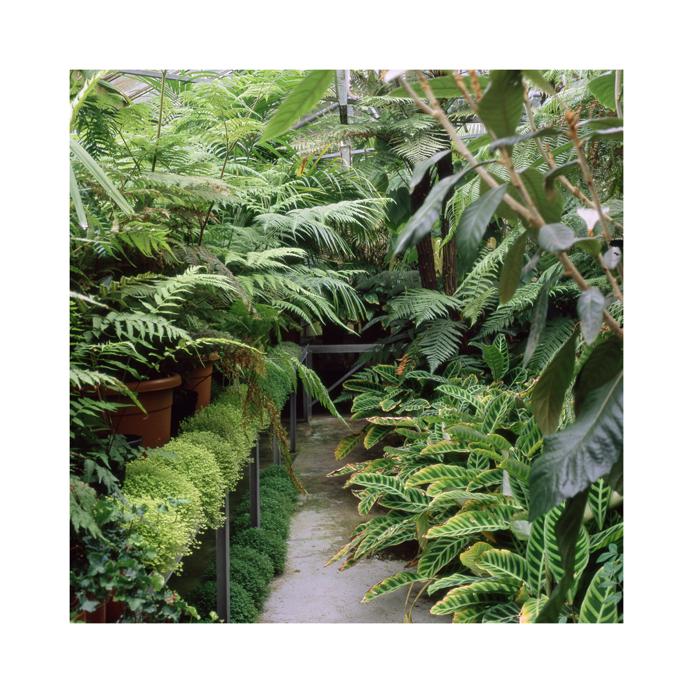 015 Tropical_Ravine_Restoration_The_Fernery_internal_i_wee.jpg