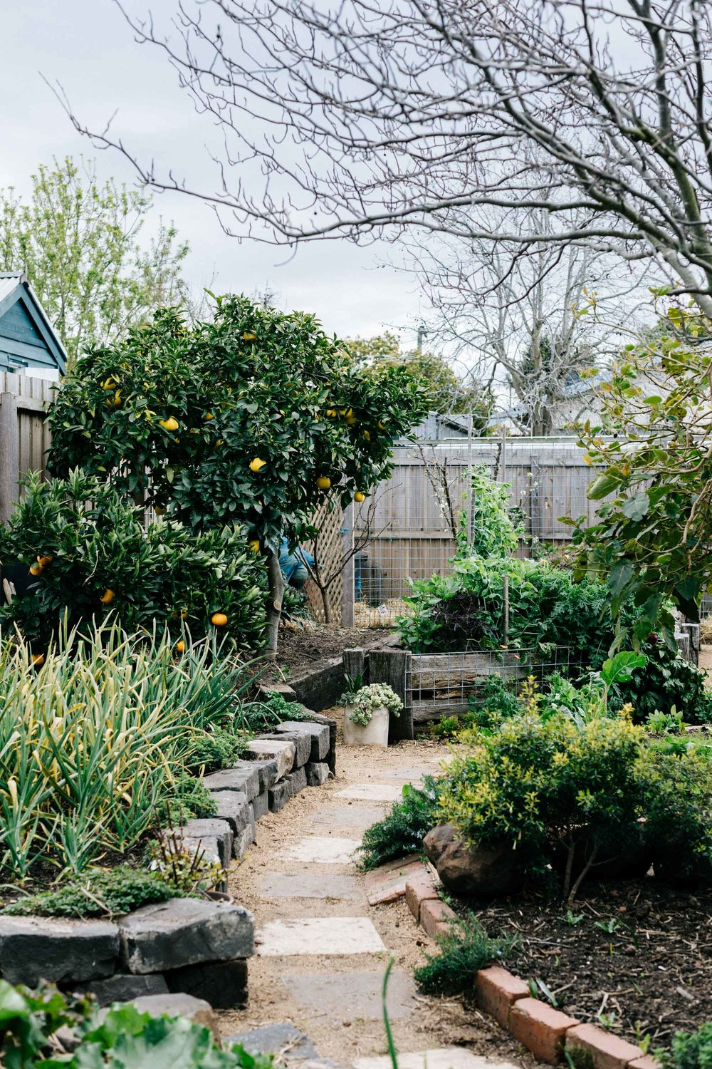 Ben Shaw Permaculture and edible garden design, Geelong and Bellarine Peninsula