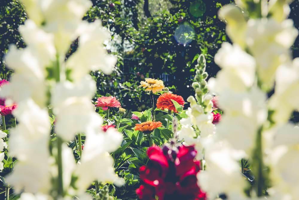 flowers small (1).jpg