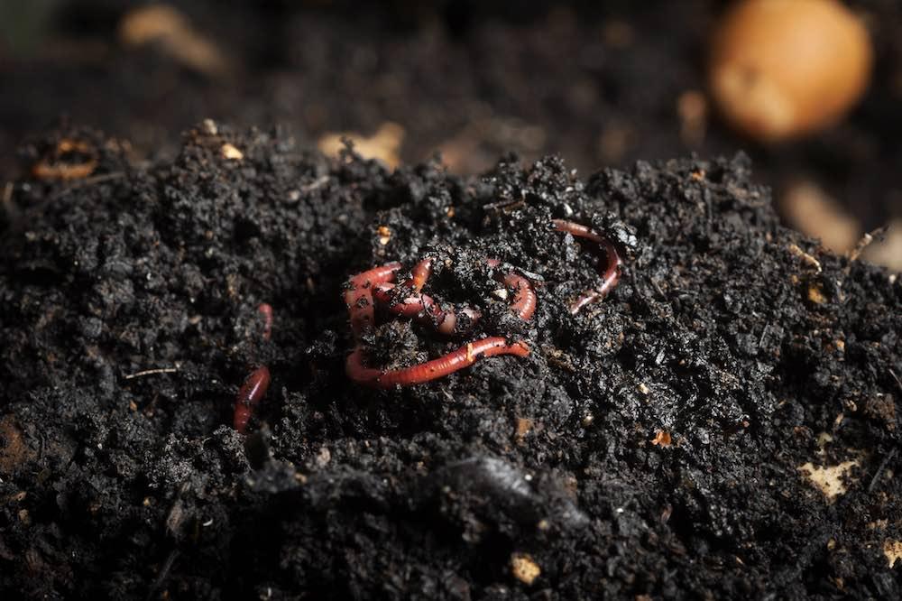worm soil small.jpg