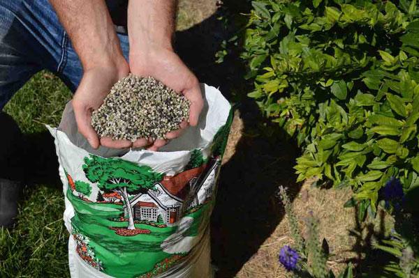 Plant Fertilization -