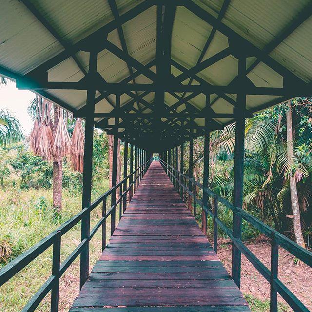 Start your healing journey here 🙌  #medicine #ayahuasca #ayahuascaretreat #plantmedicines #ayahuascaperu #ayahuascaretreats #plantatree #iquitos
