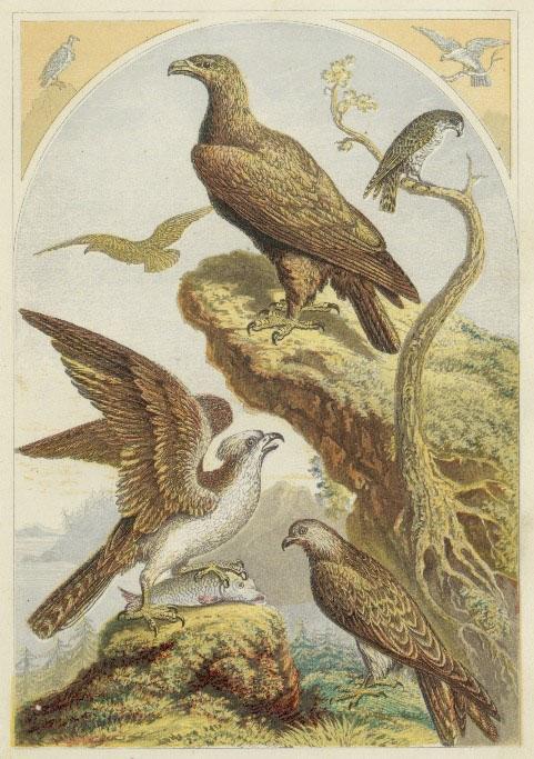 birds-of-prey-01.jpg