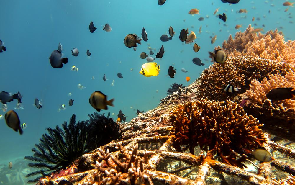 corals5.jpg
