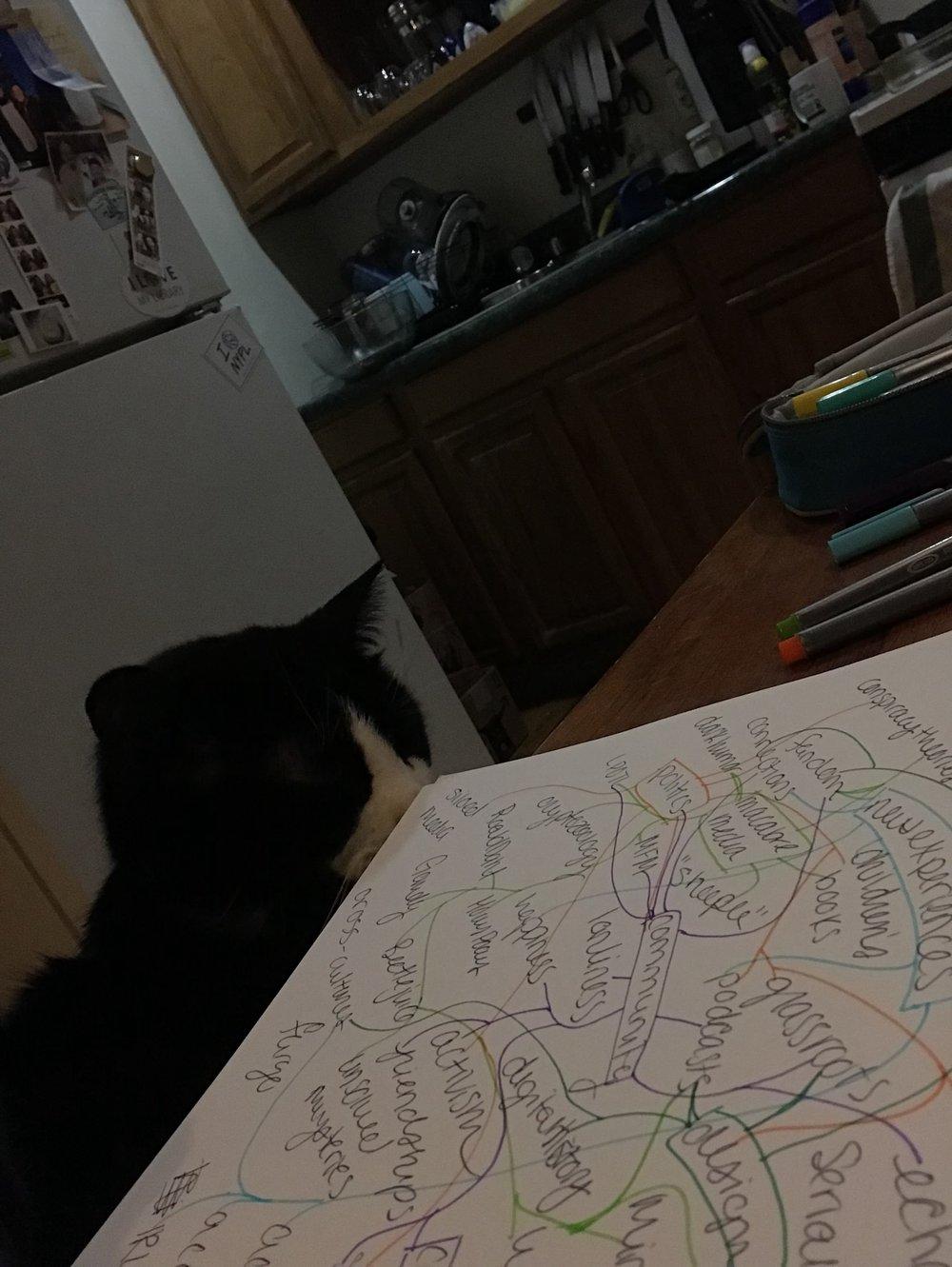 Obligatory Cat Pic