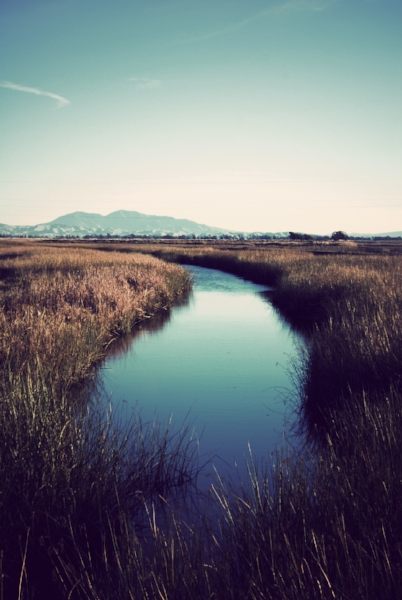 Suisun Marsh, California