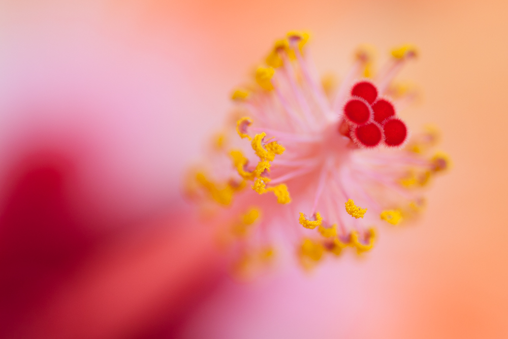 nature-photography-abstract-macro-flower-jaymes-dempsey-hibiscus.jpg