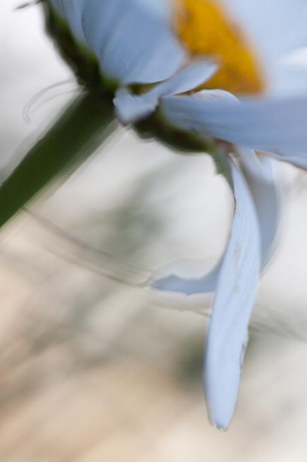 abstract-daisy-autumn