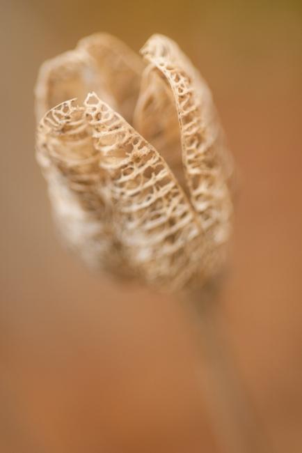 seed-autumn-flower