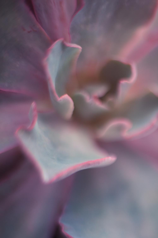 July-Blog-Macro-Photography-Flora-Ann-Arbor-Jaymes-Dempsey.JPG