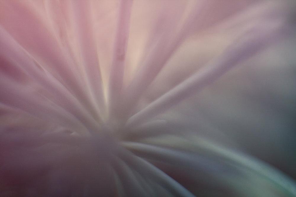 July-Blog-Macro-Photography-Flora-Ann-Arbor-Jaymes-Dempsey-4.JPG