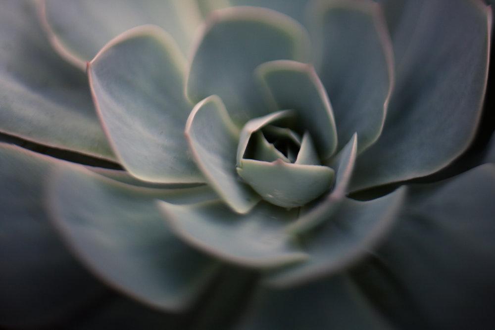 July-Blog-Macro-Photography-Flora-Ann-Arbor-Jaymes-Dempsey-5.JPG