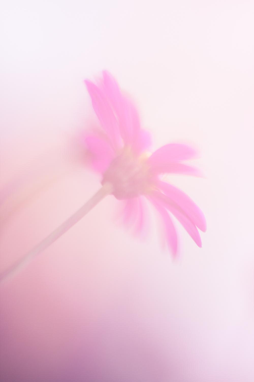 July-Blog-Macro-Photography-Flora-Ann-Arbor-Jaymes-Dempsey-8.JPG