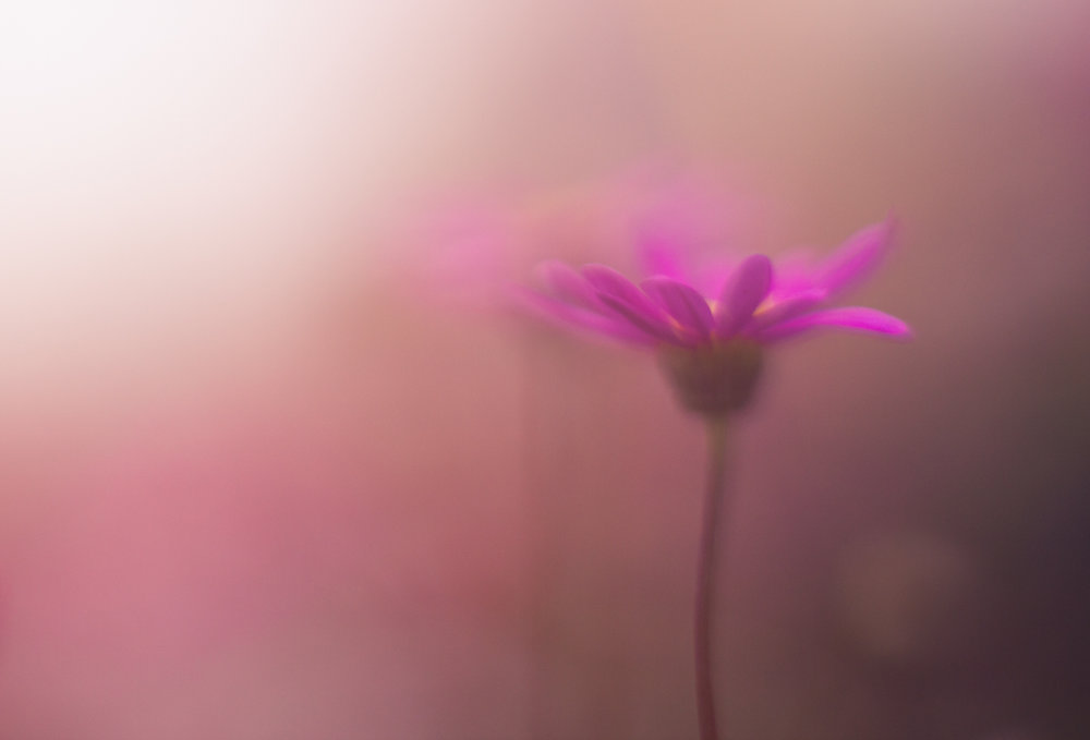July-Blog-Macro-Photography-Flora-Ann-Arbor-Jaymes-Dempsey-9.JPG