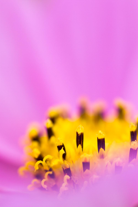 July-Blog-Macro-Photography-Flora-Ann-Arbor-Jaymes-Dempsey-10.JPG