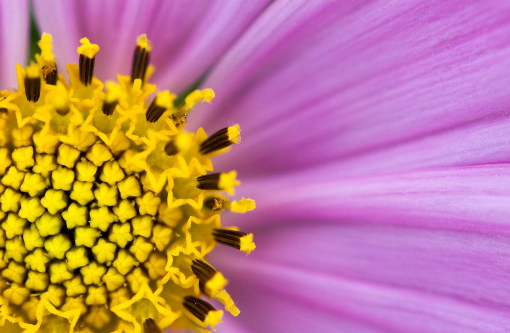 July-Blog-Macro-Photography-Flora-Ann-Arbor-Jaymes-Dempsey-11.JPG