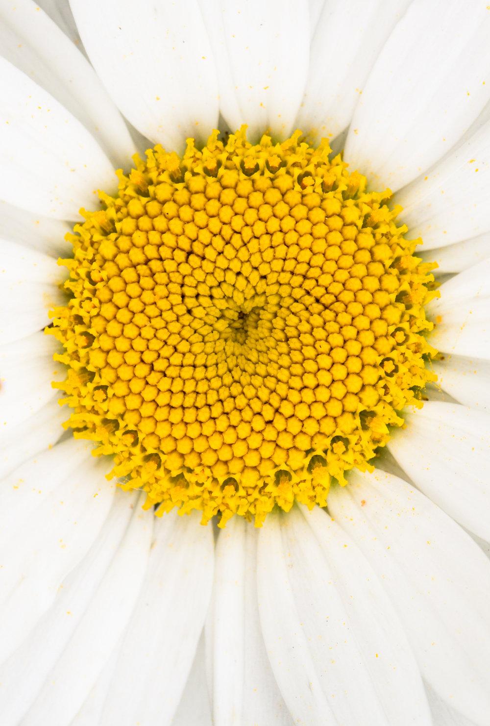 July-Blog-Macro-Photography-Flora-Ann-Arbor-Jaymes-Dempsey-13.JPG