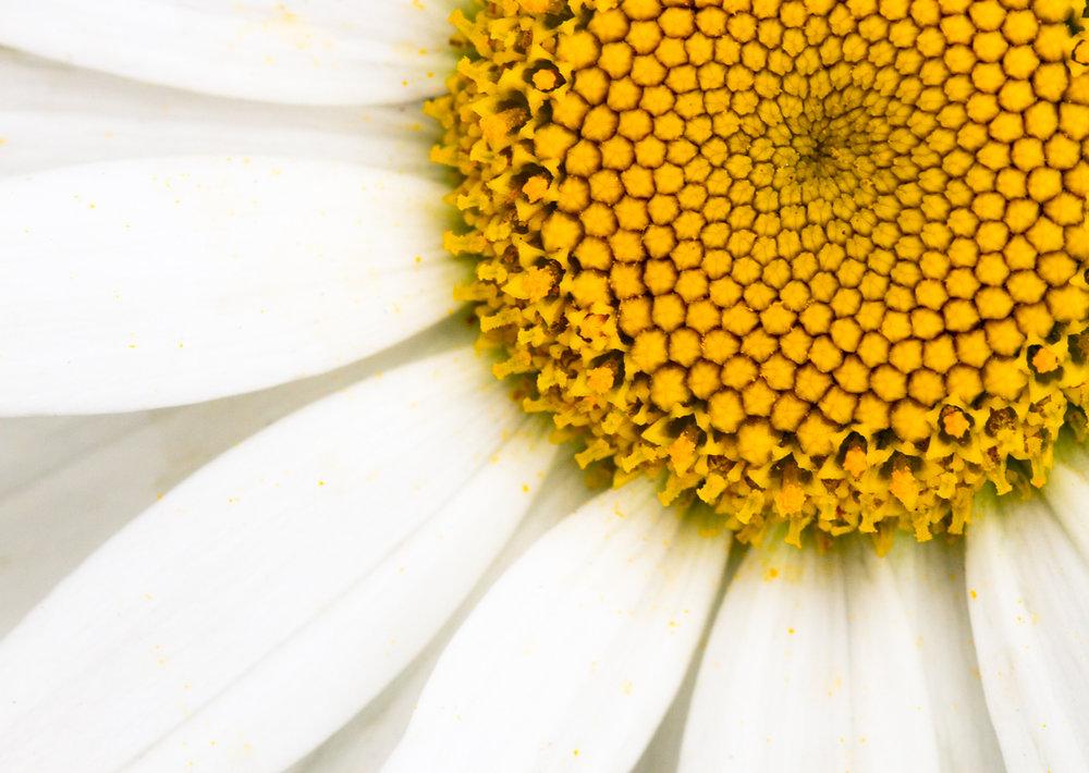 July-Blog-Macro-Photography-Flora-Ann-Arbor-Jaymes-Dempsey-14.JPG