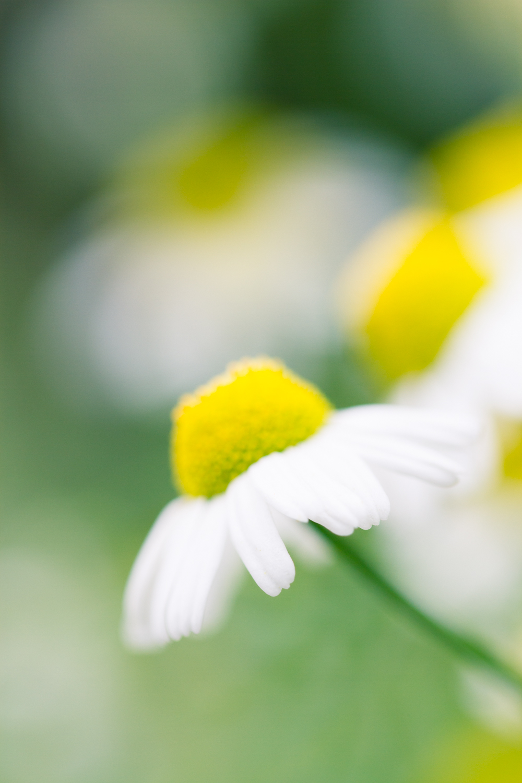 July-Blog-Macro-Photography-Flora-Ann-Arbor-Jaymes-Dempsey-16.JPG