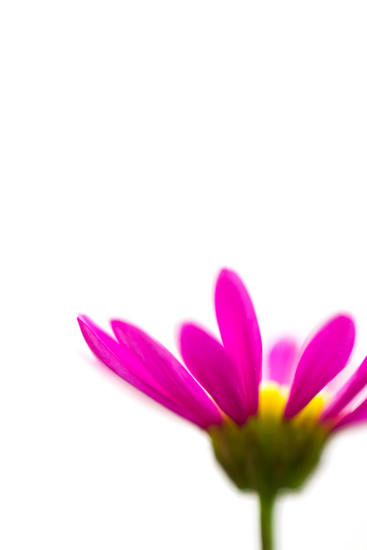July-Blog-Macro-Photography-Flora-Ann-Arbor-Jaymes-Dempsey-17.JPG