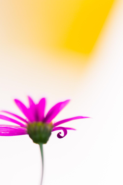 July-Blog-Macro-Photography-Flora-Ann-Arbor-Jaymes-Dempsey-19.JPG