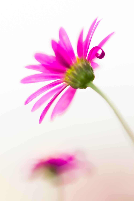 July-Blog-Macro-Photography-Flora-Ann-Arbor-Jaymes-Dempsey-20.JPG