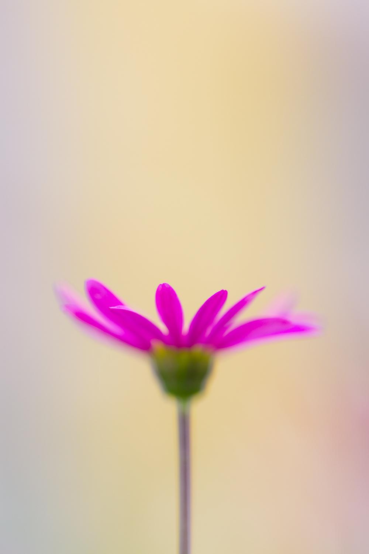 July-Blog-Macro-Photography-Flora-Ann-Arbor-Jaymes-Dempsey-21.JPG