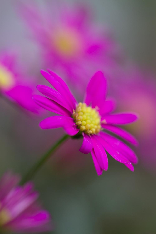 July-Blog-Macro-Photography-Flora-Ann-Arbor-Jaymes-Dempsey-22.JPG