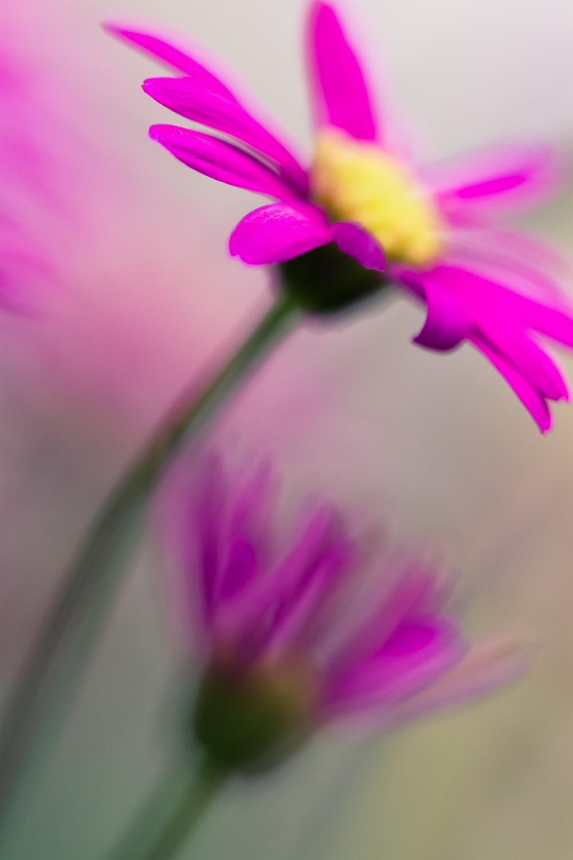 July-Blog-Macro-Photography-Flora-Ann-Arbor-Jaymes-Dempsey-23.JPG