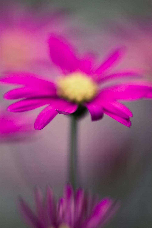 July-Blog-Macro-Photography-Flora-Ann-Arbor-Jaymes-Dempsey-24.JPG
