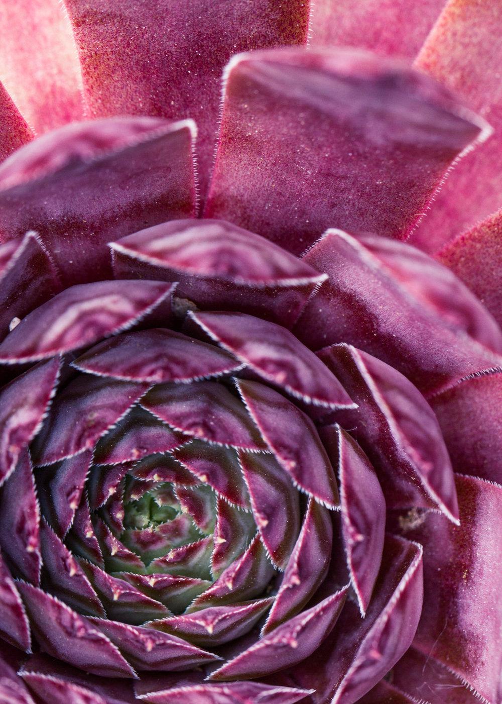 July-Blog-Macro-Photography-Flora-Ann-Arbor-Jaymes-Dempsey-25.JPG