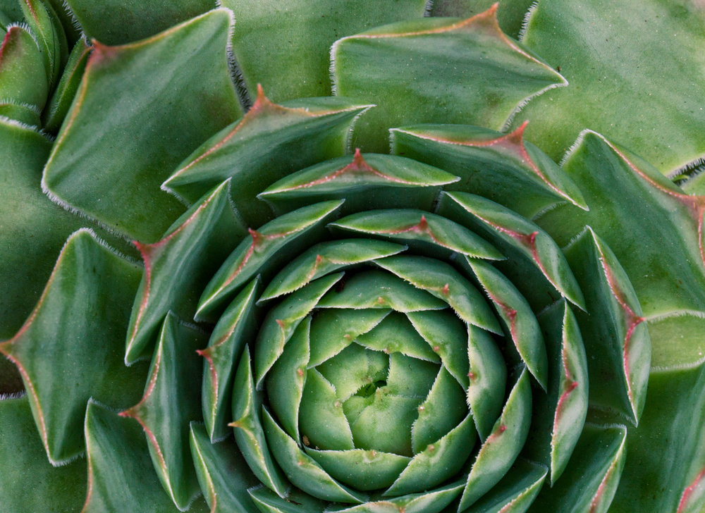 July-Blog-Macro-Photography-Flora-Ann-Arbor-Jaymes-Dempsey-27.JPG