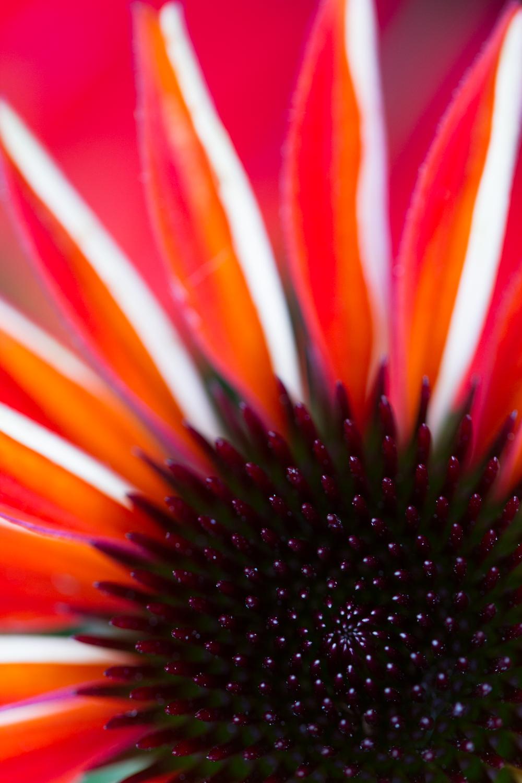 July-Blog-Macro-Photography-Flora-Ann-Arbor-Jaymes-Dempsey-30.JPG