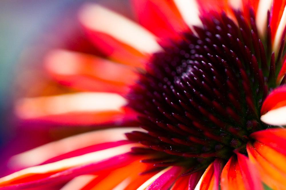 July-Blog-Macro-Photography-Flora-Ann-Arbor-Jaymes-Dempsey-31.JPG