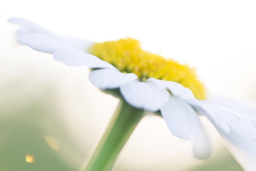 July-Blog-Macro-Photography-Flowers-Ann-Arbor-Jaymes-Dempsey-2.JPG