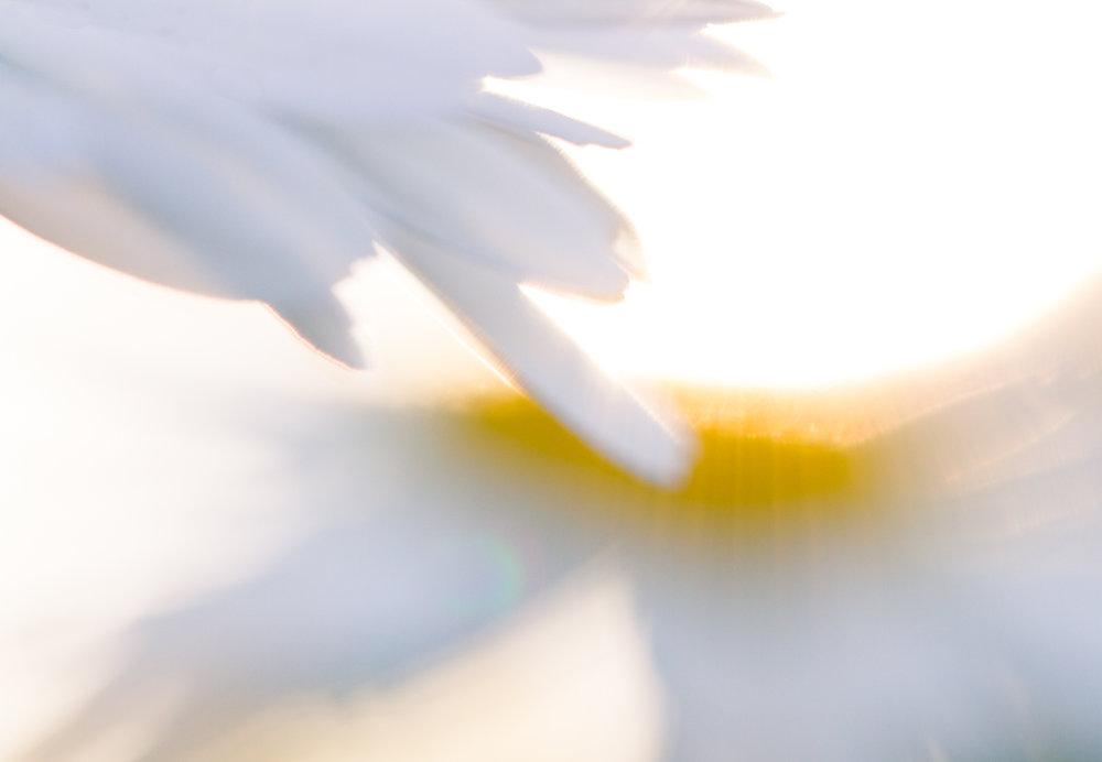 July-Blog-Macro-Photography-Flowers-Ann-Arbor-Jaymes-Dempsey.JPG